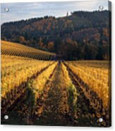 Bella Vida Vineyard 1 Acrylic Print