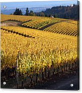 Bella Vida Vineyard 3 Acrylic Print