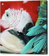 belle Ara Macao oiseaux tropicaux de Maui  Acrylic Print