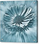Bellis In Cyan  #flower #flowers Acrylic Print