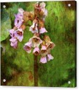 Bells 9186 Idp_2 Acrylic Print