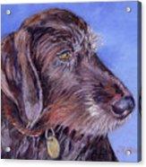 Beloved Gina Acrylic Print