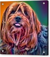 Beloved Maggie Acrylic Print