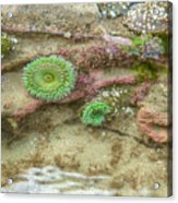 Below The Surface Acrylic Print