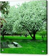 Bench Among.the Blossoms Acrylic Print