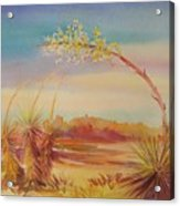 Bending Yucca Acrylic Print by Summer Celeste
