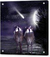 Beneath A Zebra Moon Acrylic Print