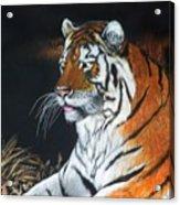 Bengal Boy  Sold Acrylic Print