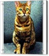 Bengal Cat Digital Oil Pastel Acrylic Print