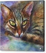 Bengal Cat Watercolor Art Painting Acrylic Print
