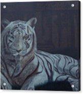 Bengala Tiger Acrylic Print
