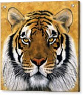 Bengali II Acrylic Print by Lawrence Supino