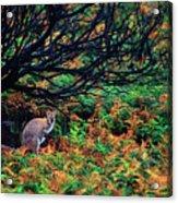 Bennet's Wallaby Acrylic Print