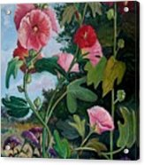 Bent Hollyhocks Acrylic Print