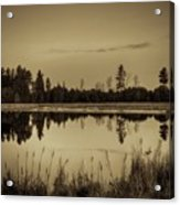 Bentley Pond Pines In Sepia Acrylic Print