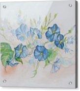 Bermuda Morning Glories Acrylic Print