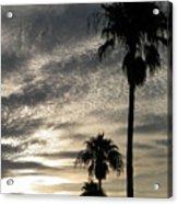 Bermuda Palms Acrylic Print