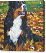 Bernese Mountain Dog Autumn Leaves Acrylic Print