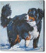 Bernese Mountain Dog In Drift Acrylic Print