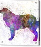 Bernese  Mountain Dog In Watercolor Acrylic Print