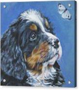 Bernese Mountain Dog Pup Acrylic Print