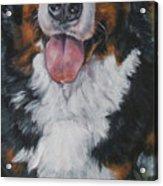 Bernese Mountain Dog Standing Acrylic Print