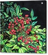 Berries - Pyracantha Acrylic Print