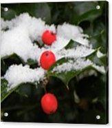 Berries In Snow Acrylic Print
