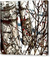 Berries And Birches Acrylic Print