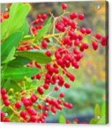 Berries Macro Acrylic Print