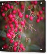 Berries Acrylic Print
