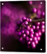 Berries Still Life Acrylic Print