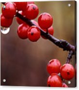 Berries With Water Droplets Acrylic Print