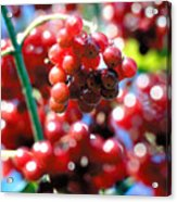 Berry Berry Red-1 Acrylic Print