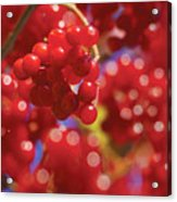 Berry Berry Red-2 Acrylic Print
