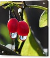 Berry Droplets Acrylic Print