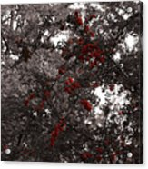 Berry Trees Acrylic Print