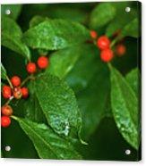 Berry's Acrylic Print