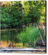 Beside The River Acrylic Print
