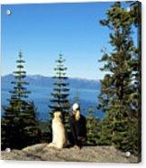 Best Buddies At Lake Tahoe Acrylic Print