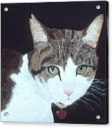 Best Cat Acrylic Print