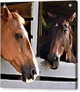 Best Friends Horse Chat Acrylic Print