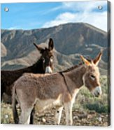 Best Of Friends Acrylic Print