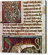 Bestiary: Lion Acrylic Print