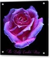 Betsy Cartier Rose Acrylic Print