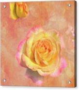 Betsy's Roses Acrylic Print