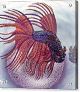 Betta Fish Acrylic Print