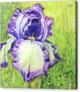 Betty's Iris Acrylic Print