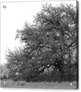 Between Two Trees Acrylic Print