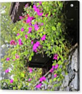 Beutiful Flowers Hang The Wall . Acrylic Print